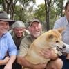 Dingo Love Licks Shadow MPs