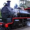 Rattler Back On Track