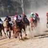 Wondai's Cup's International Twist