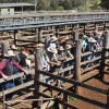 Storm Damages Saleyards