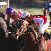 Well-Travelled Horses Target Burrandowan