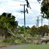 Tree Branch Snaps Powerlines