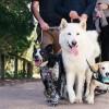 Dog Blitz Nabs Hundreds