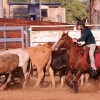 Students Test Their Skills On Horseback