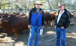 Buyers Hoof It To The South Burnett
