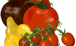 The Accidental Tomato