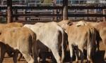 Sale Breaks Month-Long Drought