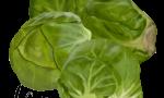 Miniature Cabbages