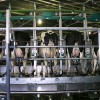 WorkCover Targets Dairy Risks