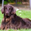 Dog Blitz Starts June 10