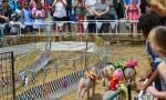 Murgon Plans Rail Trail Festival