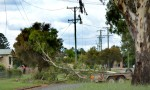 Tree Branch Snaps Powerlines