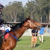 Horse's Name Revives Anzac Memories