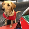 Dogs  Sniff Out Biosecurity Risks