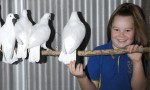 Penny's Pigeons Primed For Big Day