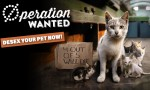 Vets Sign Up For 'Operation: Wanted'