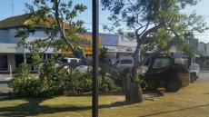 Tree Snaps In Main Street