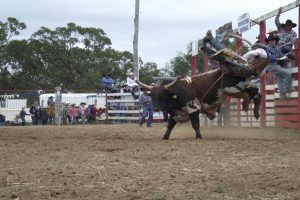 Blackbutt Show On This Saturday