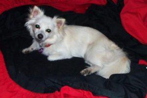 Family Grieves For Slain Pets