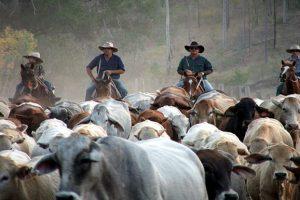 Consumers Trust Aussie Beef