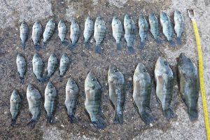 Breeder Fined For Illegal Fish