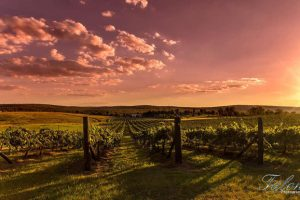Wine Industry Group Winds Up