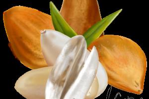 Dodging Bunya Nuts