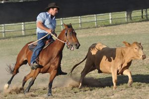 Campdraft Expects Big Crowds