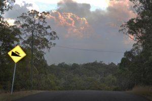 Large Fire At Wattle Camp