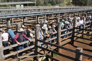 Council Rejects Saleyard Offers