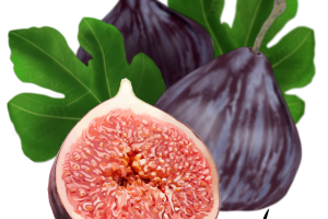 An Historic Fruit