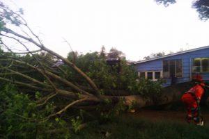Falling Tree Crushes Car