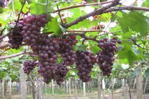Wine Workshop To Boost Tourism