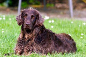 Council Dog Discount Bid Fails
