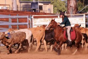 Students Test Their Skills On Horseback