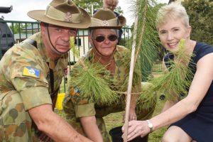 Pine Tree Salutes Anzac Sacrifices