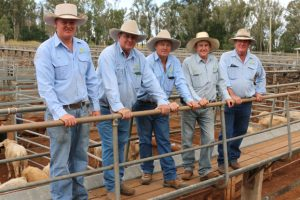 Saleyards Put Out To Tender