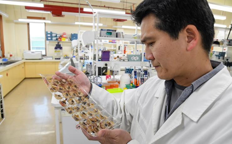 CSIRO Leads Armyworm Project
