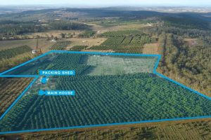Mt Binga Orchard To Be Auctioned