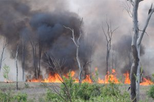Fire At Wooroolin Wetlands