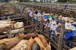 Strong Start For 2021 Cattle Sales