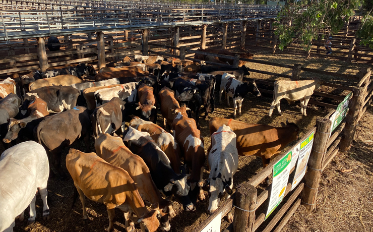 Strong Sales at Coolabunia, Murgon