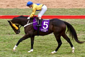 Plenty In Wondai's Cavalry Charges