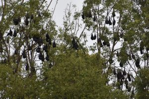 Info Session To Discuss Bats