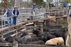 Demand For Cattle Stays Strong