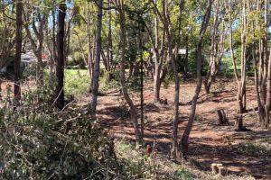 Flying Fox Vegetation Cleared